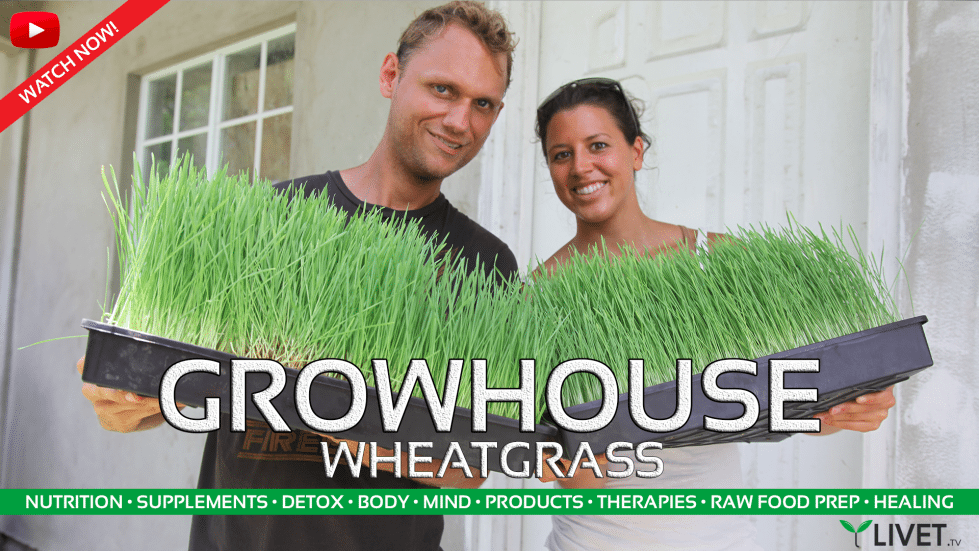 WHEATGRASS FOR NUTRITION ◦ Benefits
